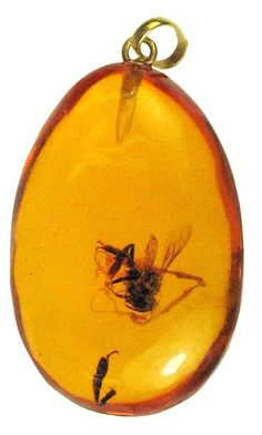 Prehistoric Bee insect in amber Jewelry 12 Million Years Old!! I'd love to find (ie, buy) a piece that had a bug in it.....someday.