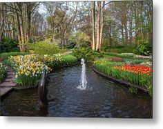 Keukenhof Little Fountain Metal Print by Jenny Rainbow. All metal prints are professionally printed, packaged, and shipped within 3 - 4 business days and delivered ready-to-hang on your wall. Choose from multiple sizes and mounting options. Fine Art Prints, Framed Prints, Beautiful Flowers Garden, Garden Buildings, How To Be Outgoing, Botanical Gardens, Spring Flowers, Fine Art Photography, See Photo
