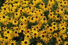 Break free of tradition - most perennials are fine for transplanting almost any time of the year. Learn a few foolproof tips and then go get the shovel!