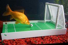 Para que tus peces jueguen al futbol XD