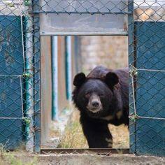 Help 5 bears find sanctuary