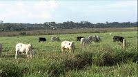 Agro News: Sustentabilidade - Fazendeiro de Rondônia é exempl...