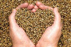 El alpiste es una semilla muy popular en el mundo animal, ya que forma parte de la alimentación de pájaros domésticos. Sin embargo, no todo el mundo conoce losgrandes beneficios que aporta a la salud humana. Las propiedades del alpiste son muchas, y entre ellas destaca su capacidad de reducir e…