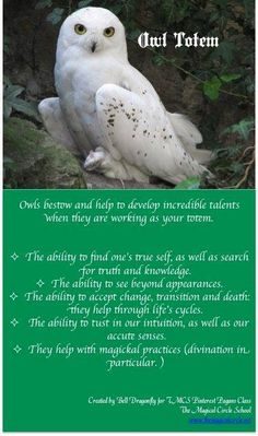 Your Animal Spirit Guide for January 29 is The Owl – Witches Of The Craft® Spirit Animal Totem, Animal Spirit Guides, Animal Totems, Animal Meanings, Animal Symbolism, Owl Facts, Owl Quotes, Magick, Wiccan