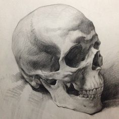 Day job. A demo piece done for private students at Cheap Joes. #art #anatomy #charcoal #drawing #skull