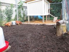 30dirtytoes: Chicken Runs and why they are as important as chicken coops.