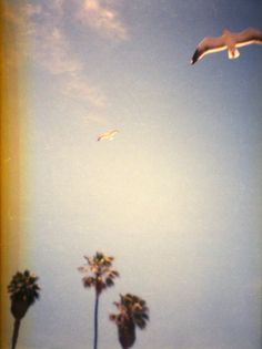 seagulls and palm trees. 35mm film, Diana Mini toy camera