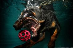 Dogs Catching Balls Under Water by Seth Casteel