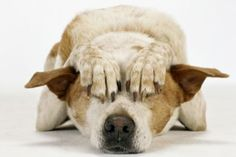 Have an anxious dog? Read on for advice from experts and useful tools. My Dog Is Skittish: Is What I'm Doing Making It Worse