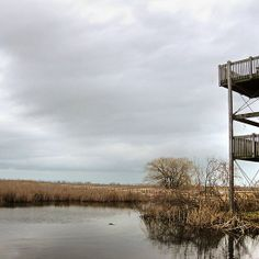 Marsh and lookout point, Point Pelee Provincial Park, Ontario Canada