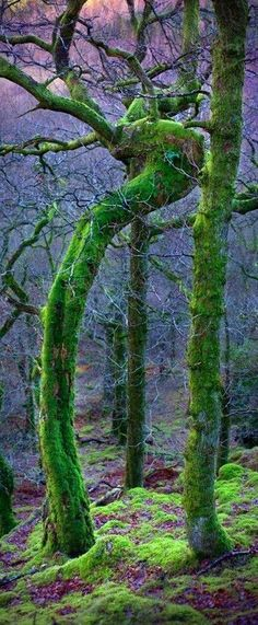 Woods in Cumbria, England By Tommy Martin on Flickr