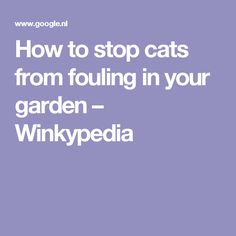 How to stop cats from fouling in your garden – Winkypedia