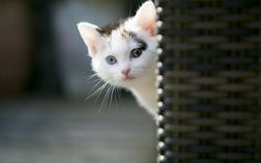 Animals Wallpaper: Cute Cat Wallpapers Images for HD Wallpaper ...