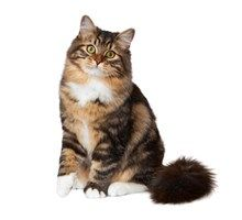Find the best cat for you and your family, browse through our list of popular cat breeds to find a low dander cat suitable for your allergy.