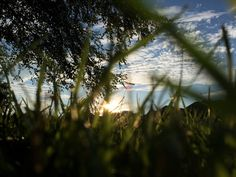 VSCO - Grass or green eyelash.  | pumpkinbunny