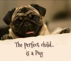 The perfect child is a pug