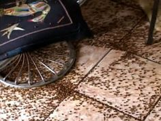 Townspeople in Western Romania are in distress over the invasion of lady bugs that have swarmed their homes and streets.