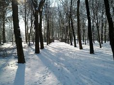 Stadsbossen - Rhenen -  Nationaal Park Utrechtse Heuvelrug