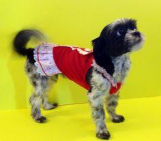 Shih tzu dog:  Khaleesi lookin cute in her little red tuxedo dress!!! www.fetchdogfashions.com   #puppy