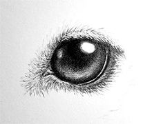 How to draw dog eyes – Drawing Techniques Love Drawings, Animal Drawings, Easy Drawings, Pencil Drawings, Drawing Animals, Pencil Sketching, Eye Drawing Tutorials, Drawing Techniques, Art Tutorials