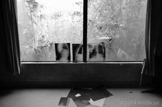 """Legend has it that at an infamous junction, """"you turned right to Tokanui if you were mad, and left to Waikeria [prison] if you were bad'. Psychiatric Hospital, October 2014, Prison, Abandoned, Creepy, Mad, History, Painting, Left Out"""