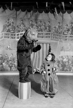 dancer bear in circus