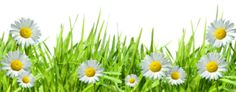 Grass with Flowers PNG by HanaBell1