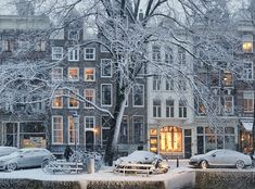 A lovely white Elm tree alongside the century old canals of Amsterdam Amsterdam Winter, Visit Amsterdam, Amsterdam City, Amsterdam Travel, Amsterdam Netherlands, Wonderful Places, Beautiful Places, Winter Scenery, Winter Photography