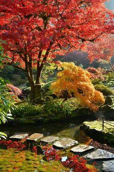 Japanese Garden Landscape, Japanese Garden Design, Japanese Gardens, Japanese Maple Garden, Japanese Garden Backyard, Diy Garden, Garden Pool, Balcony Garden, Japanese Style