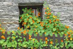 Case di pietra...finestre fiorite... by gabri58, via Flickr
