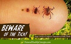Beware of the ticke! 10 Things You Should Know About Lyme Disease!