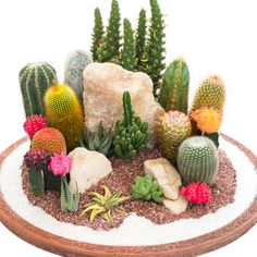 With their unusual shapes and interesting textures, these assorted succulents will dazzle your garden! Best suited for container planting, they thrive in the sunshine all summer then add a unique look to your home when brought indoors for the winter.