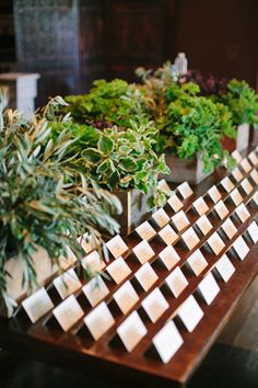 Fresh Herbs Escort Card Table - use plantable seed paper for the cards. Herb Wedding, Wedding Reception Flowers, Wedding Seating, Green Wedding, Floral Wedding, Seed Paper, Seating Cards, Southern Weddings, Table Cards