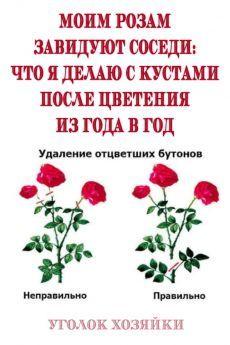 Advice, Garden, Tips, Plants, Rose, Garten, Pink, Lawn And Garden, Gardens