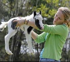 Einstein the world's smallest horse