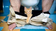 kitten with man on toilet