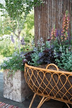 Perennials for sunny locations - Perennial Power Health 2020, Garden Spaces, Garden Planning, Garden Inspiration, Container Gardening, Perennials, Planting Flowers, Outdoor Living, Planter Pots