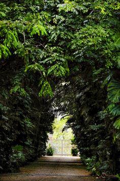 Portão de Entrada Fazenda Vila Rica