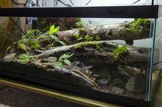Tortoise Pets – Reasons Why We Love Them! Reptile Habitat, Reptile Room, Reptile Cage, Decor Terrarium, Snake Terrarium, Aquariums, Paludarium, Snake Enclosure, Biotope Aquarium