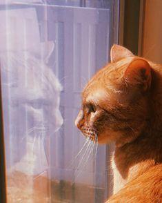 HUJI cam - cat aesthetic