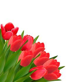 http://freedesignfile.com/93693-red-tulip-flowers-creative-design-vector/