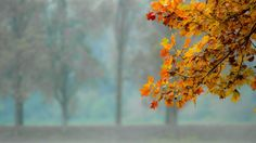 autumn leaves yellow summer morning wallpaper download free
