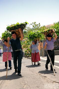 Madeira - Rural Life. Photo by Hugo Reis
