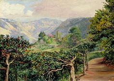 Coffee Plantation in Jamaica, painted by Marianne North in 1872