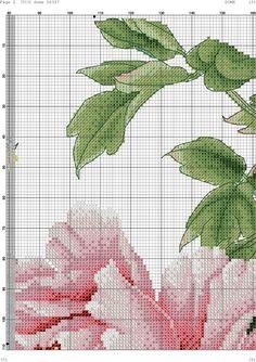 magnolie 3