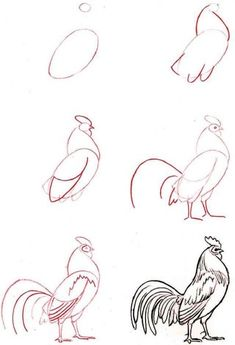 How To Draw A Rooster Step 5 Roosters Rooster Art Chicken Art