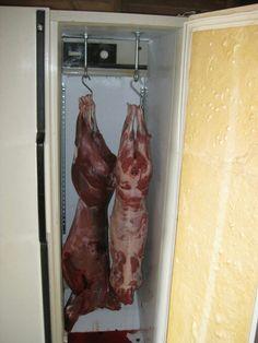 Home refrigerator deer cooler Hunting Tips, Archery Hunting, Deer Hunting, Deer Food, Deer Meat, Deer Processing, Deer Feeders, Deer Camp, Survival