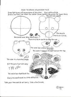 How to Draw Worksheets for Young Artist: How To Draw A Raccoon Face, Lesson and Worksheet. http://marymaking.blogspot.com/2013/04/raccoon-portraits.html