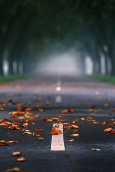 Fallen Leaves, Herbst, Germany
