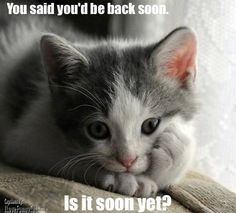 I will be back soon!  Ready to live your life with better health and true FREEDOM?  Check this out ~ http://funtoberich.com/amassnow #online home business #network marketing #work from home #joy to live